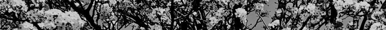 cropped-flowering-tree-medium.jpg